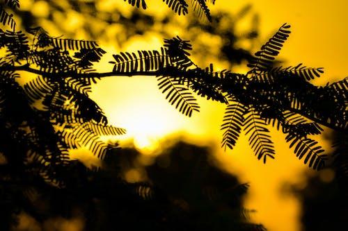 Free stock photo of dak, evening, evening sun