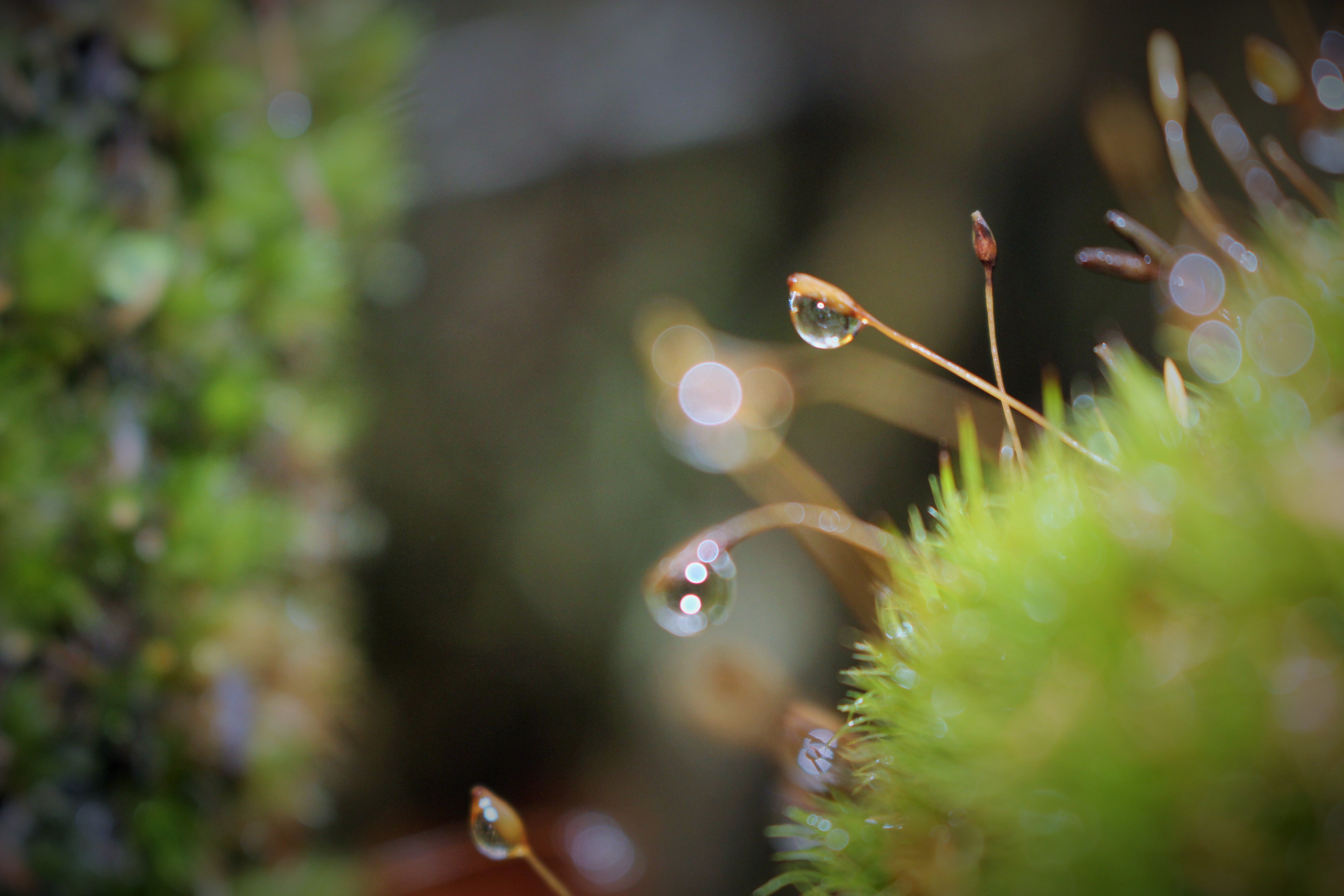 Dew Drops On Green Grass Close Up Photo