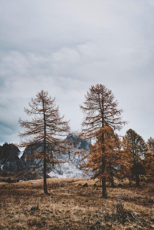 Základová fotografie zdarma na téma 4k tapeta, Alpy, borovice