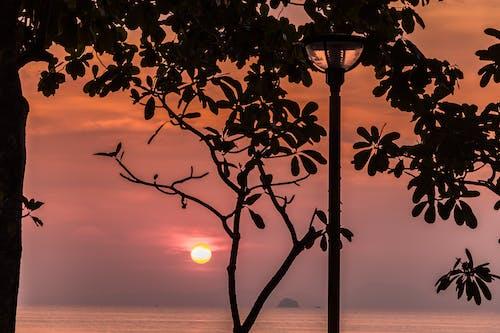 Kostenloses Stock Foto zu bäume, bunt, foto, naturfotografie