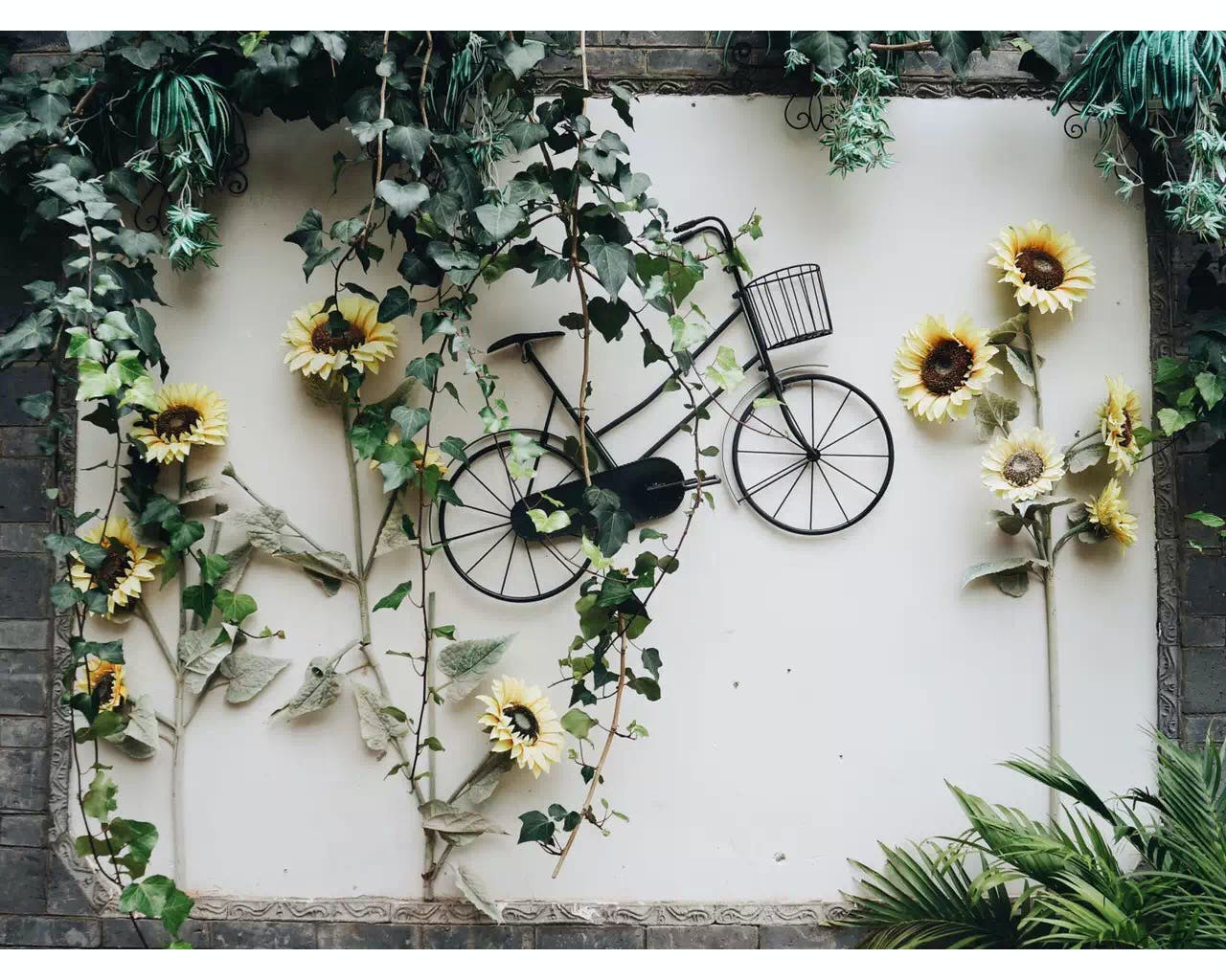 Free stock photo of wall, flower, green, bike