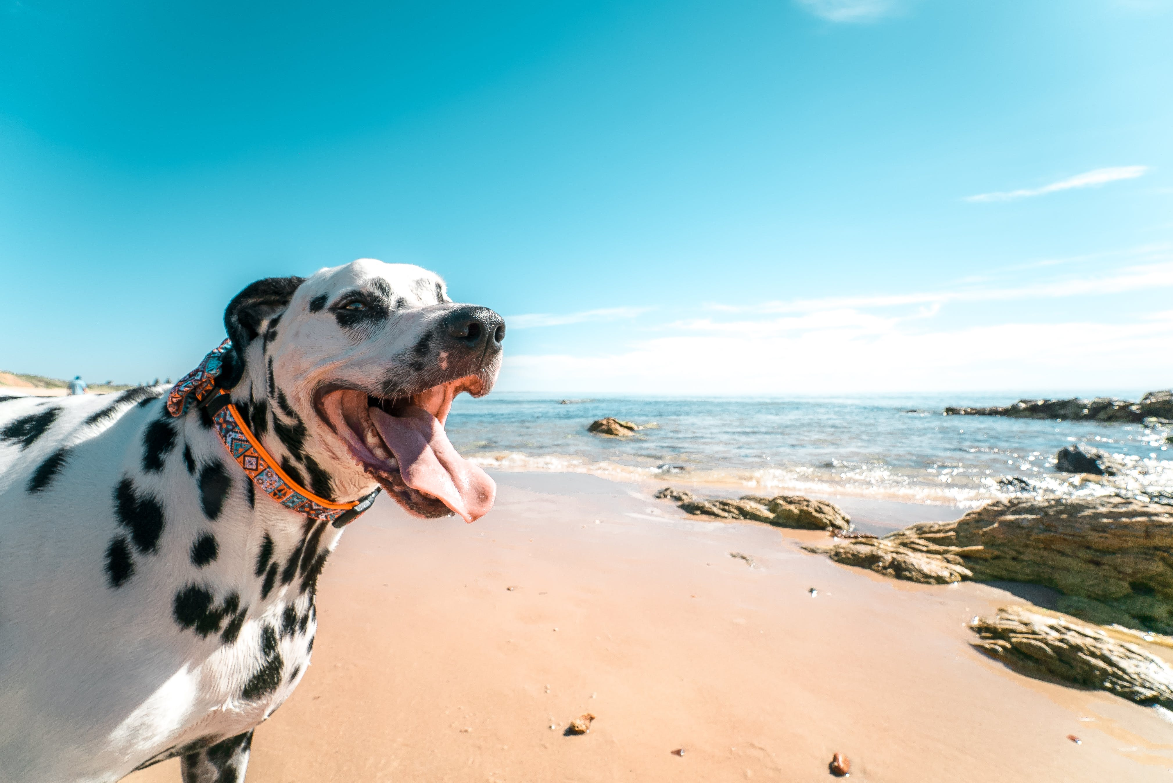 Photography of a Dog on Seashore