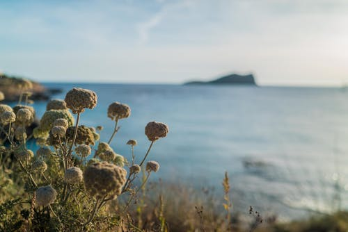 Gratis stockfoto met ibiza, natuur, strand