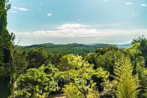 Gratis stockfoto met groen, hemel, ibiza, natuur