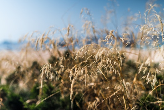 Close Up Photo of Dried Grass