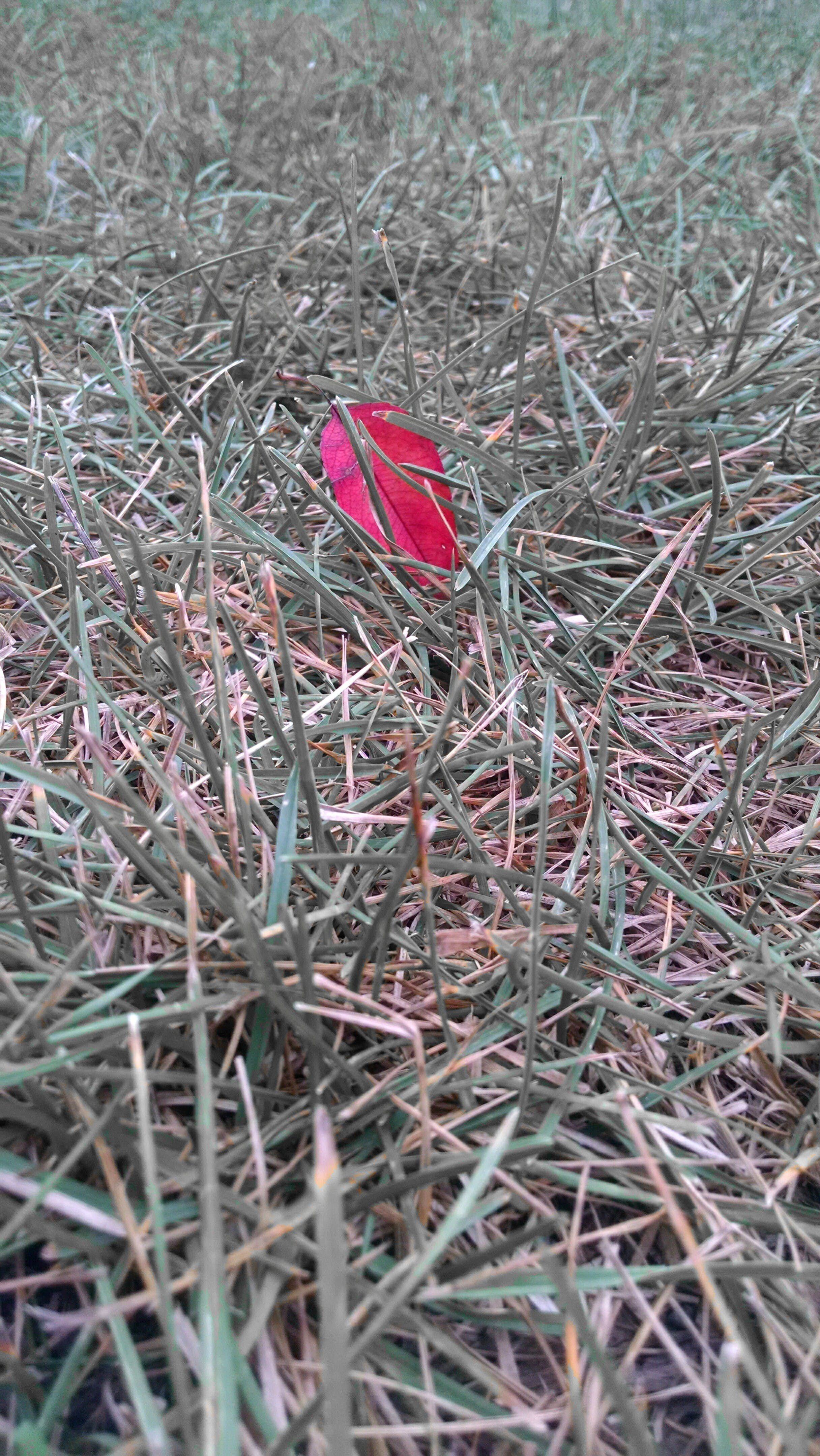 Free stock photo of grass, leaf
