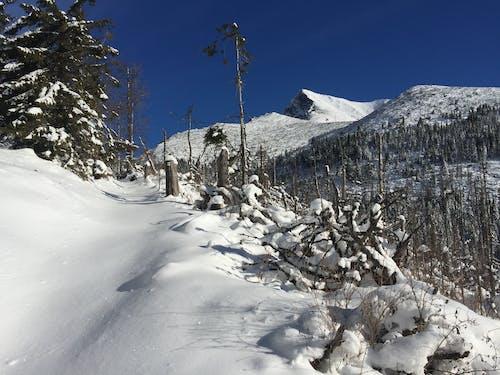冬, 冬の山, 山岳, 雪の無料の写真素材