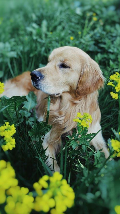 Ingyenes stockfotó állat, álló kép, aranyos témában