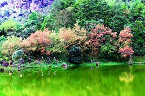 Fotobanka sbezplatnými fotkami na tému ázijský, čerešňa, čerešňový kvet, čerstvý