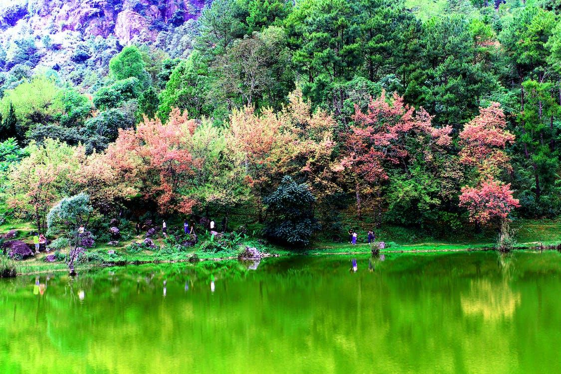 aigua, arbres, Asiàtic