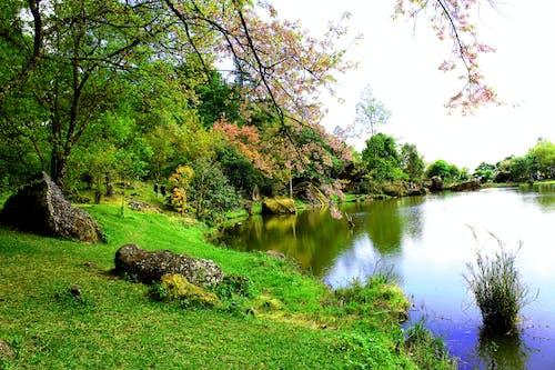 Foto d'estoc gratuïta de aigua, arbres, branques, calma