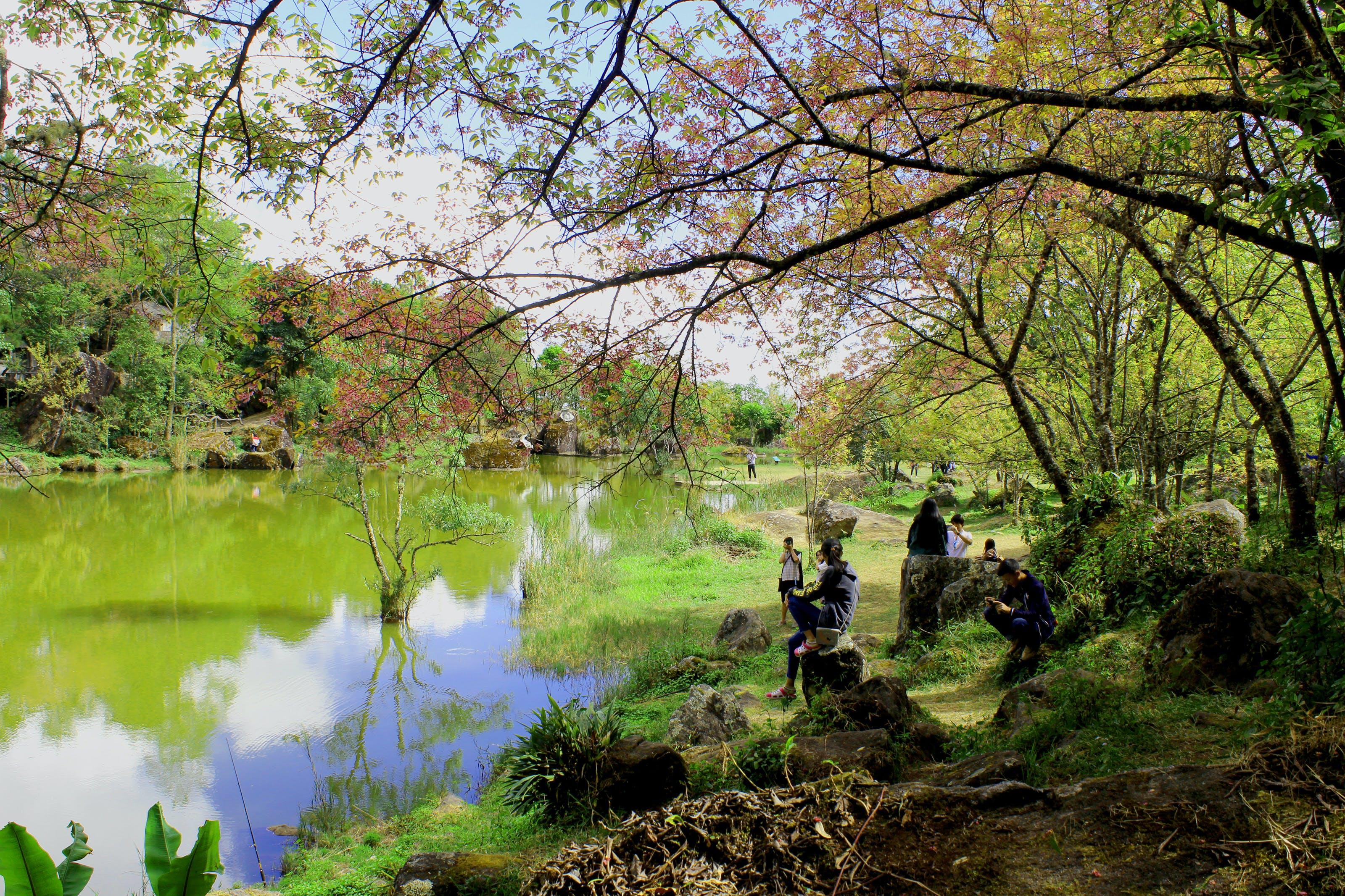Free stock photo of Asian, background, beautiful, beauty