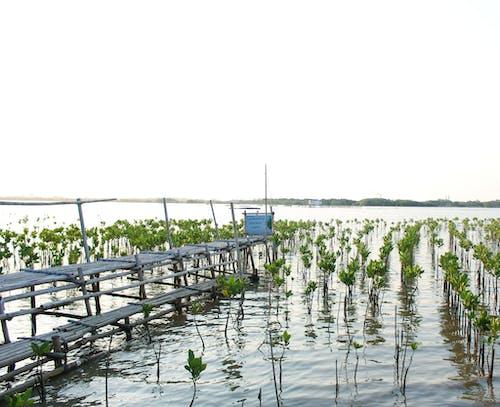 Free stock photo of beach, coast line, mangroves