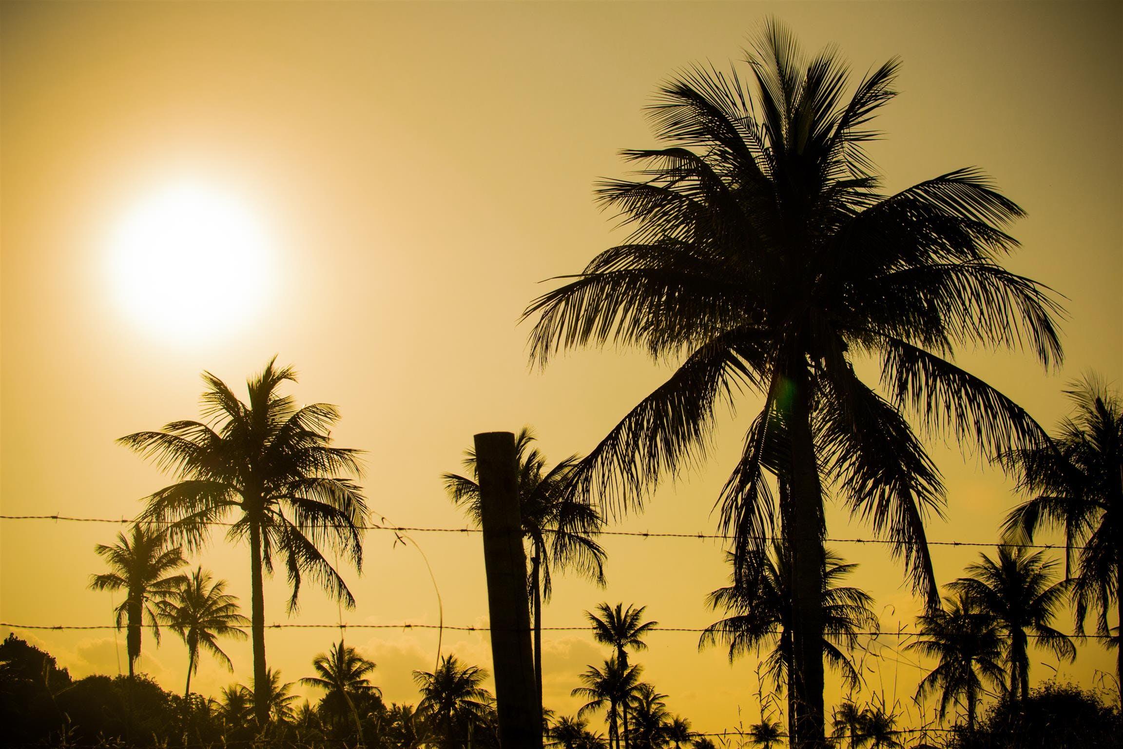 Free stock photo of palmtree, 35mm, hot sun