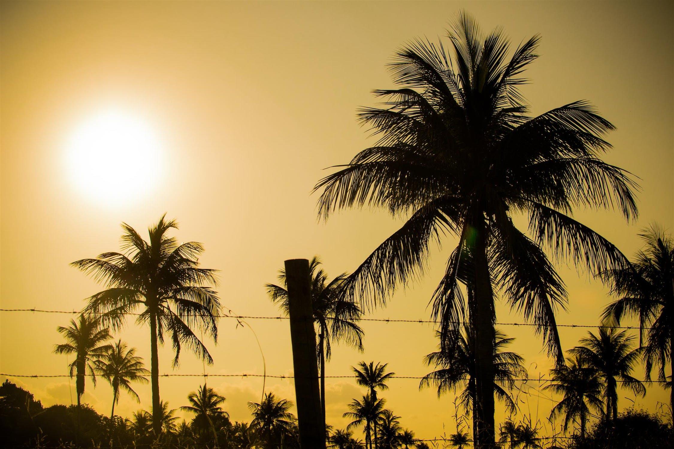 картинка пальмы и солнца милей есть