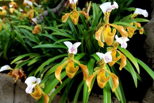 Free stock photo of nature, garden, yellow, plant