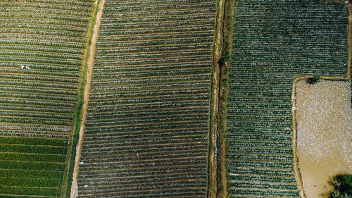 Aerial Shot of an Agricultural Land