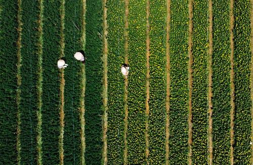 Farm Workers in the Farm Fields