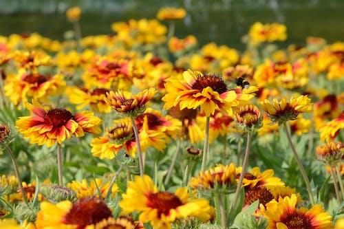 Free stock photo of bee, field of flowers, flower, flowers