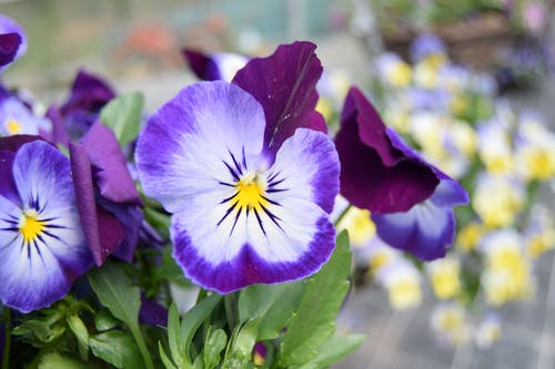 Free stock photo of flower, flowers, garden, garden flower