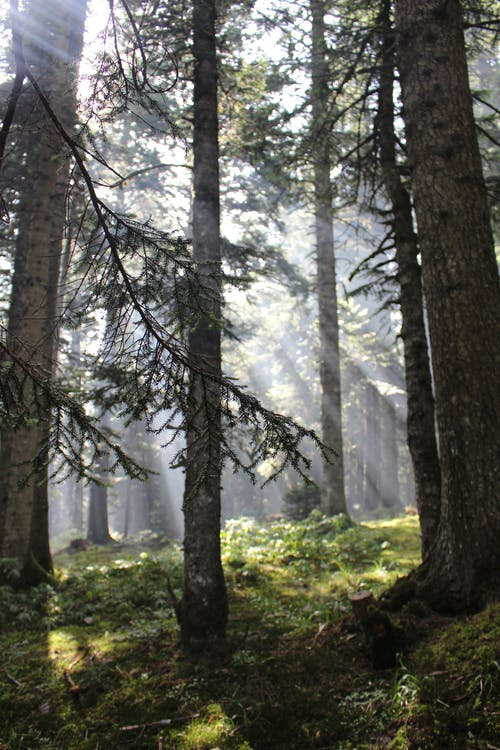 Sun Rays Brightening the Forest