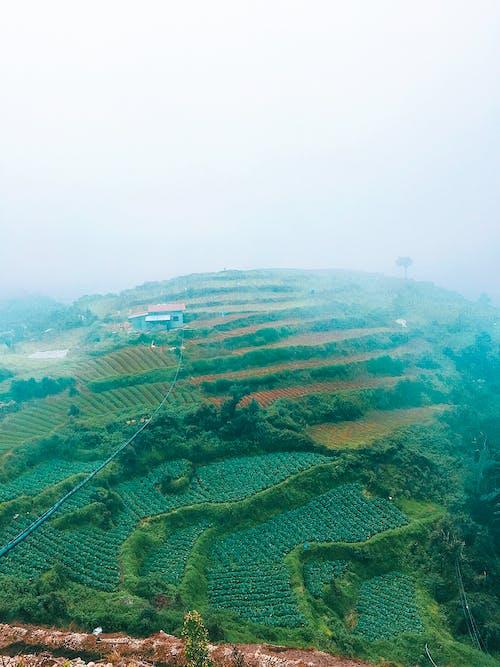 Základová fotografie zdarma na téma čerstvá zelenina, fotografie přírody, hora, matka příroda