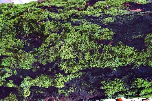 Free stock photo of moss, tree, tree branch, mech