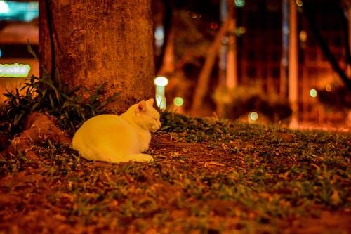Kostenloses Stock Foto zu beruhigend, kätzchen, katze, katzengesicht