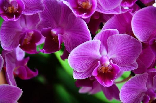 Macro Photography of Purple Petaled Flower