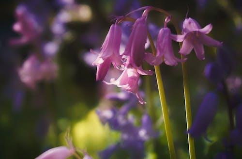 Základová fotografie zdarma na téma detailní záběr, fialové květiny, flóra