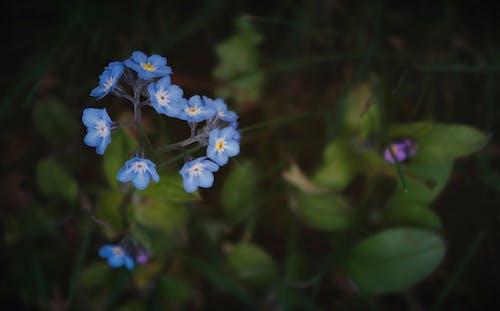 Základová fotografie zdarma na téma detailní záběr, flóra, květiny