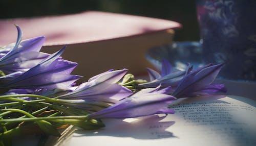 Základová fotografie zdarma na téma básně, čtení, detailní záběr