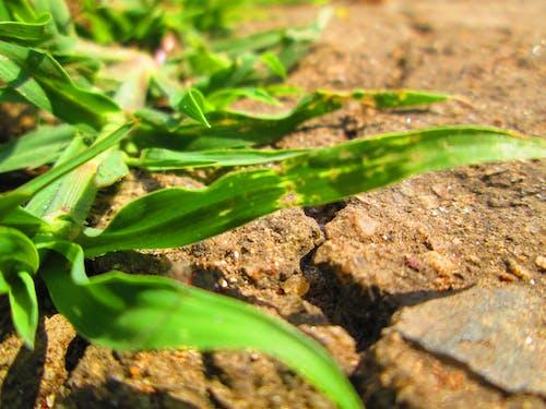çim, gün ışığı, yeşil içeren Ücretsiz stok fotoğraf