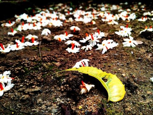 dökülmüş yapraklar, düşen çiçekler, yağmur içeren Ücretsiz stok fotoğraf