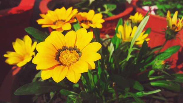 Free stock photo of green, yellow flower