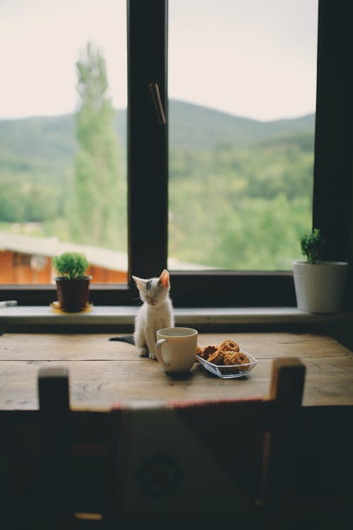 Kitten Sitting On A Wooden Table With Food