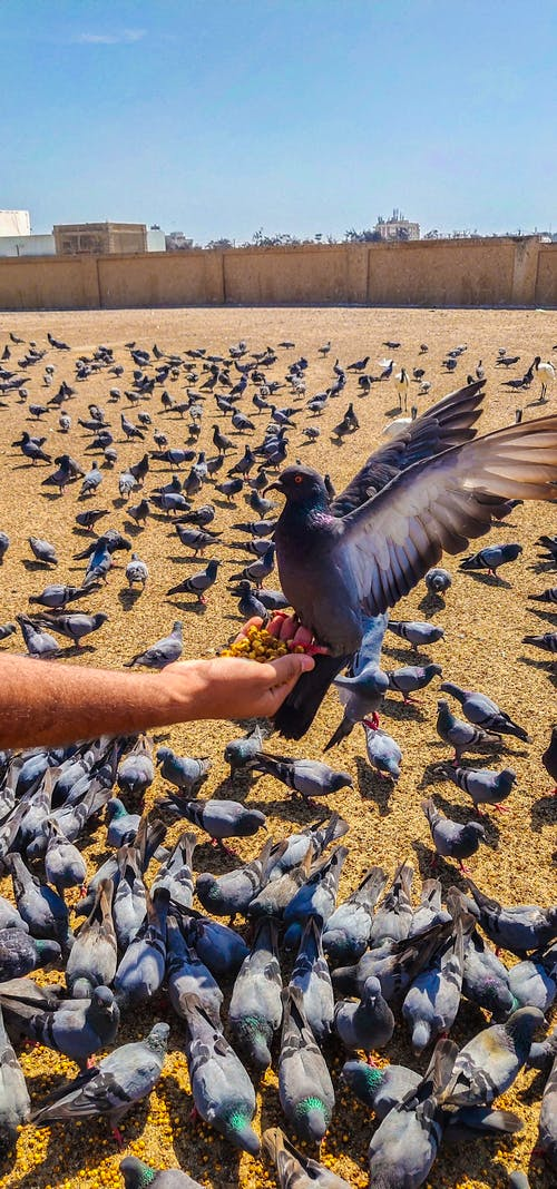 Free stock photo of animal photography, animals, bird