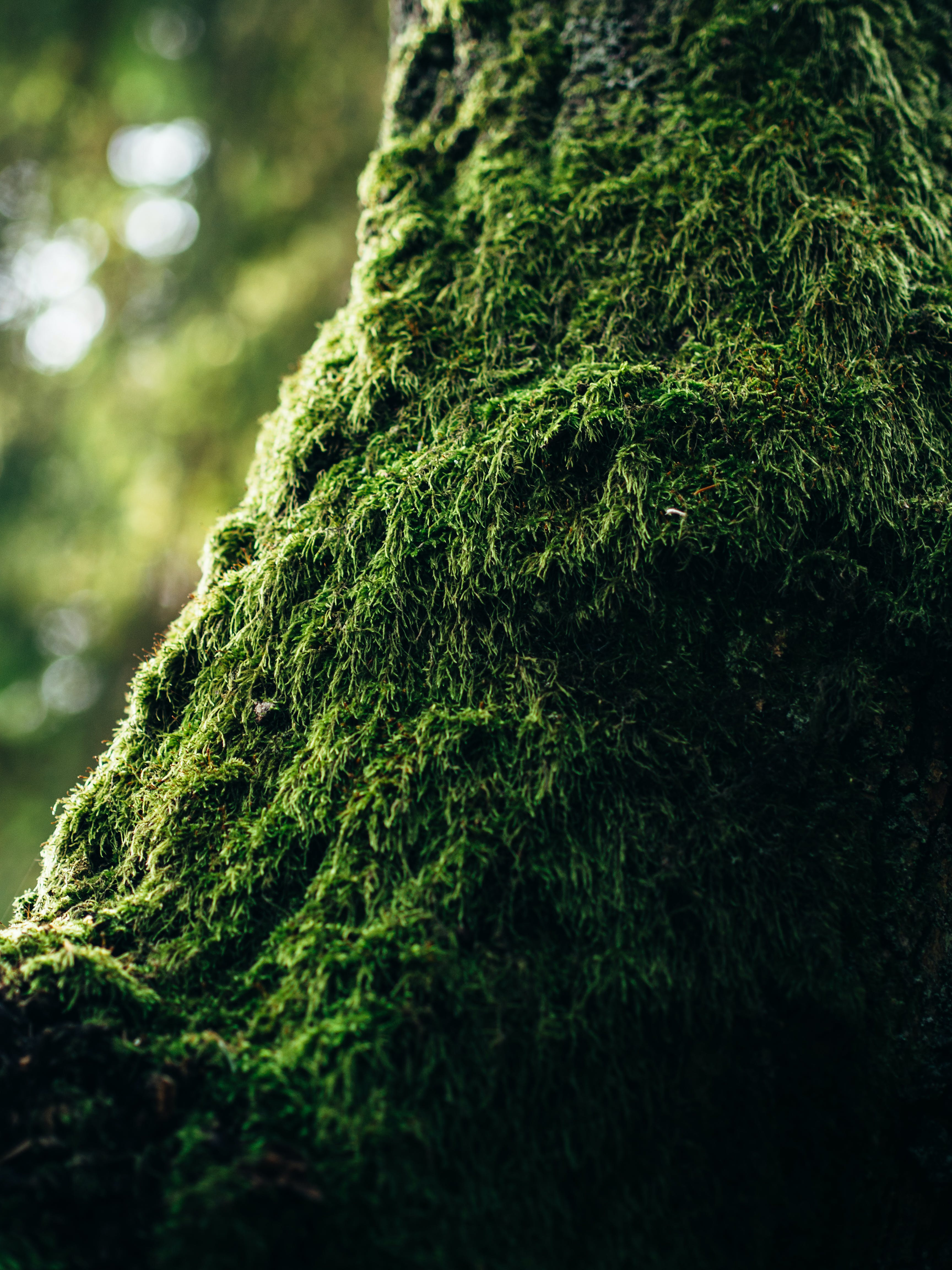 Green Moss in Tilt Photography