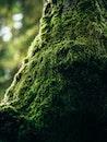 nature, moss, tree