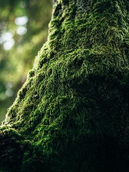 Green Moss in Tilt Photography