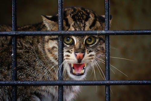 Ilmainen kuvapankkikuva tunnisteilla eläin, kissa, viidakko