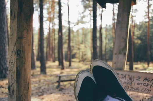 Free stock photo of relaxation, forest, rest