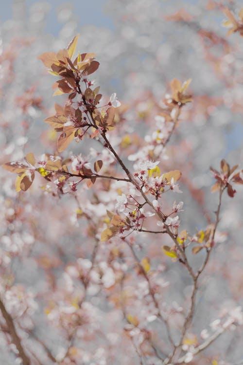 Darmowe zdjęcie z galerii z drzewo, flora, gałąź