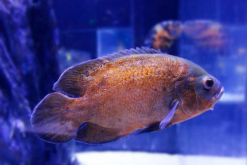 Free stock photo of aquarium, bleu, nage