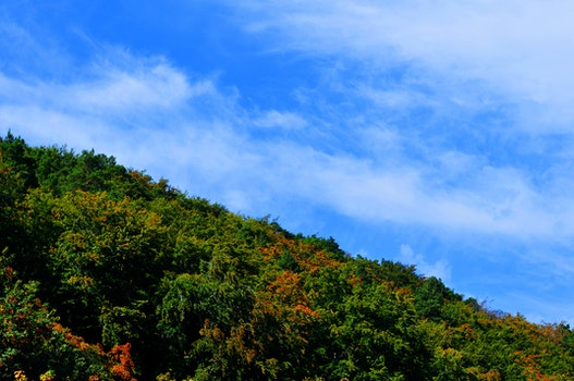 Free stock photo of sky, clouds, forest, tree