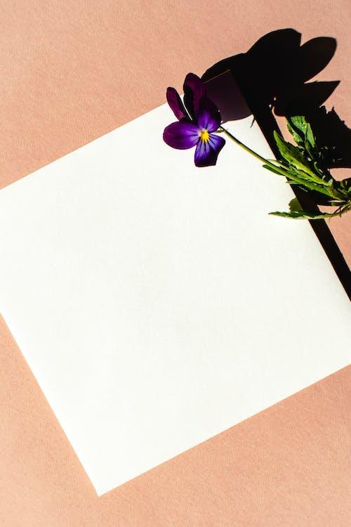 垂直拍攝, 幹, 極簡主義 的 免費圖庫相片
