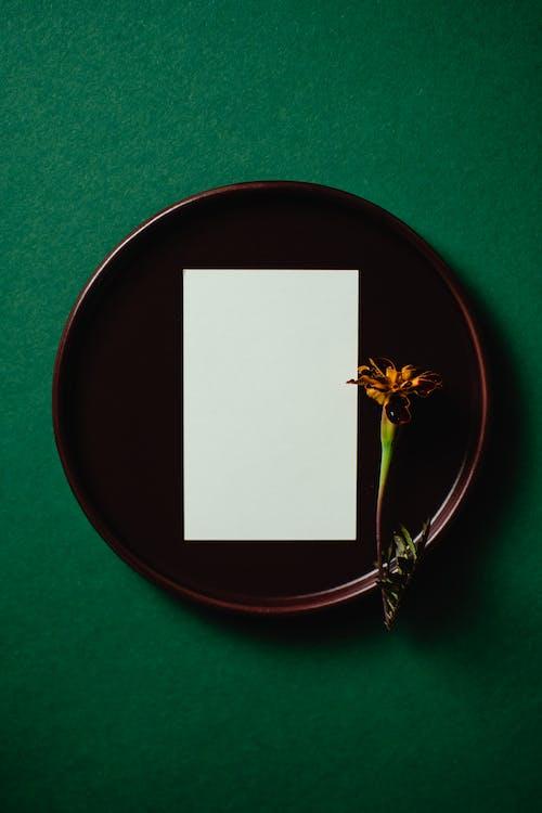 Gratis stockfoto met blanco, bloem, bovenaanzicht