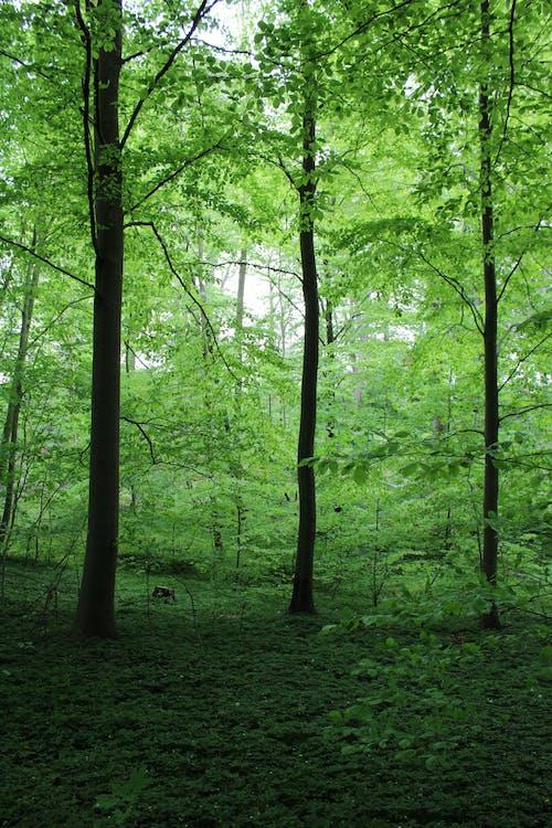 Foto profissional grátis de árvore, cênico, exuberante