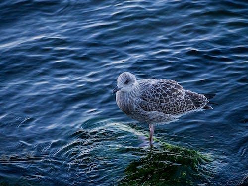 動物, 棲息, 水, 野生動物 的 免費圖庫相片