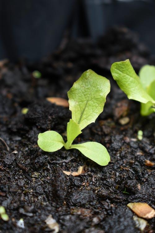 園芸植物, 土壌, 工場の無料の写真素材